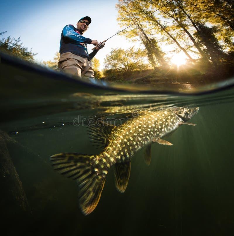 Pescador e pique, vista subaquática imagem de stock