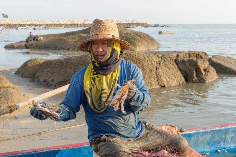 Pescador local em seu barco de pesca, classificando sua captura da manhã do caranguejo imagens de stock