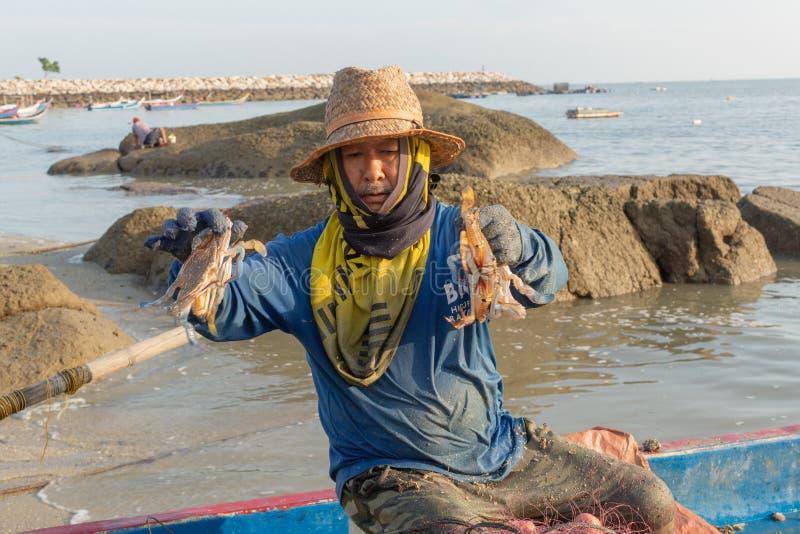 Pescador local en su barco de pesca, clasificando su captura de la mañana del cangrejo imagenes de archivo