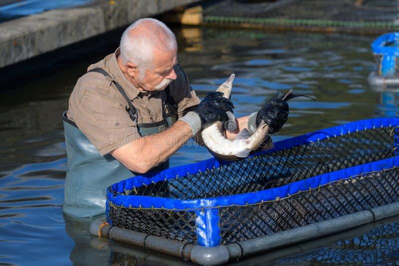 Pescador mayor que sostiene pescados imagen de archivo libre de regalías