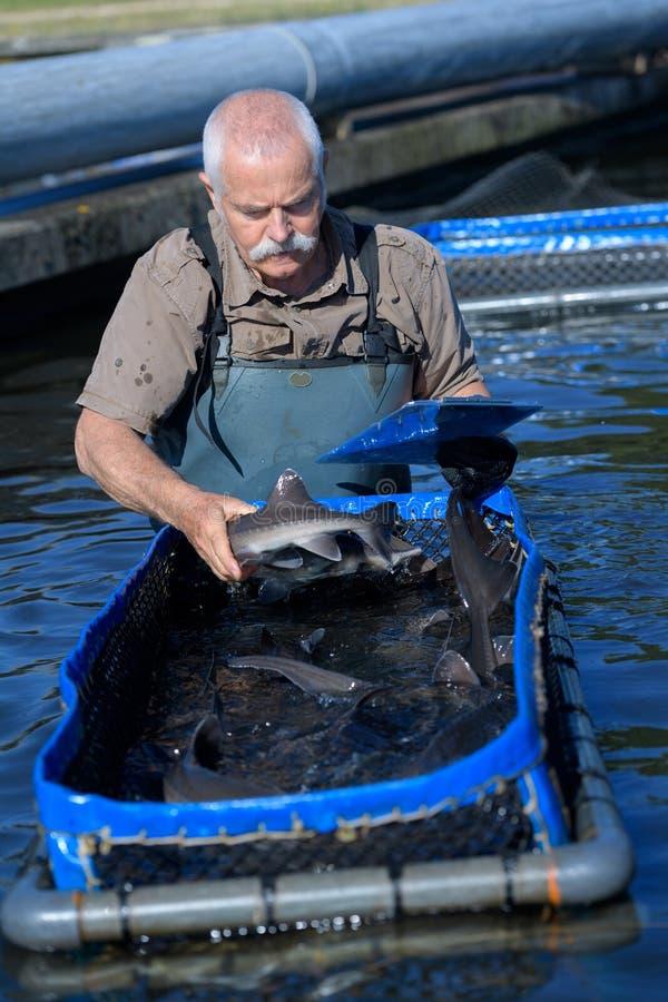 Pescador mayor que sostiene pescados en agua fotografía de archivo libre de regalías