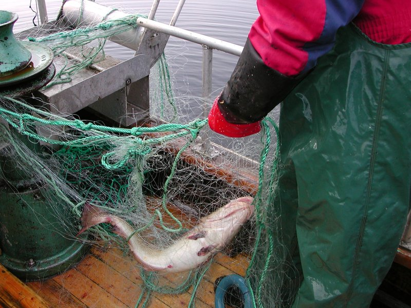 Pescador norueguês fotografia de stock