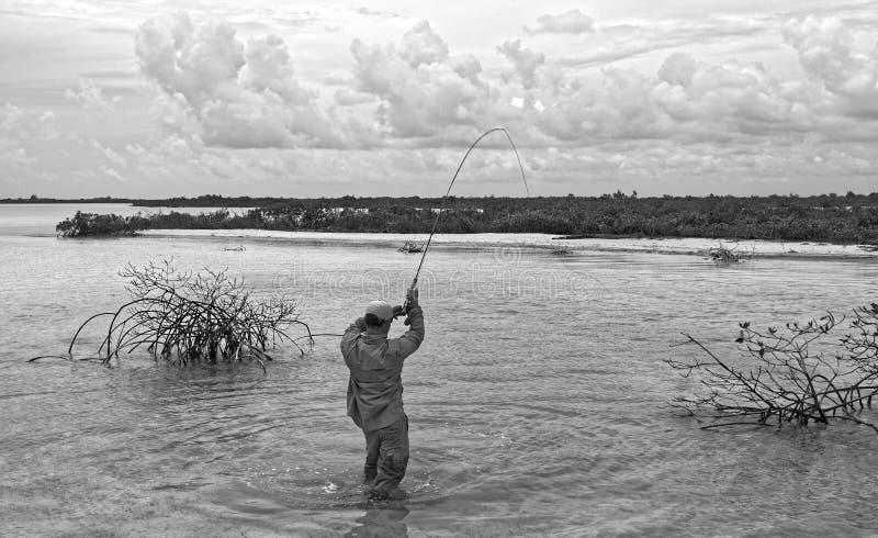 Pescador que joga um bonefish nos manguezais foto de stock