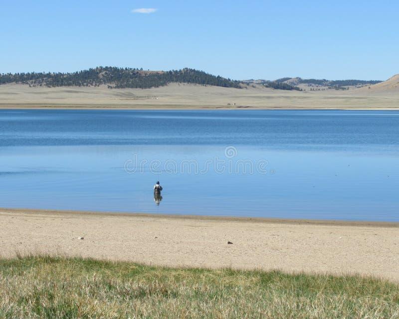 Pescador solitário no reservatório de Spinney imagem de stock