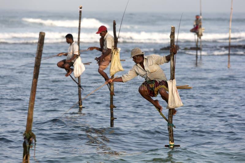 Pescadores de poste en el trabajo en la madrugada en Koggala en la costa sur de Sri Lanka foto de archivo libre de regalías