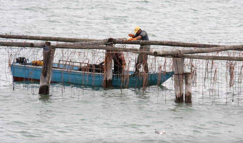 Pescadores de trabajo en el mar adriático italiano imagen de archivo libre de regalías
