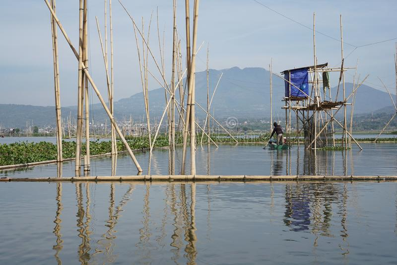 Pescadores en Rawa que encierran el lago, Java central, Indonesia fotos de archivo
