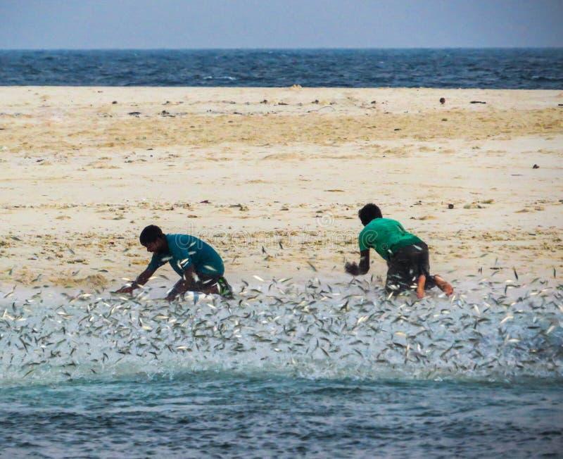 Pescadores maldivos que travam peixes com mãos foto de stock
