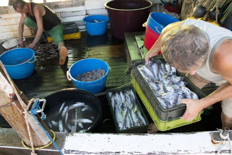 Pescadores que arreglan la captura en una cubierta de un barco del barco rastreador foto de archivo libre de regalías