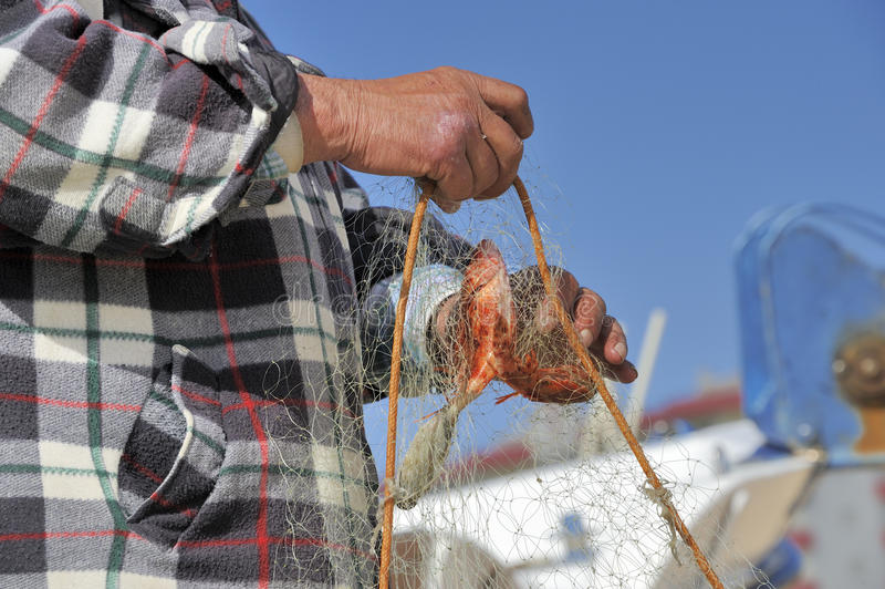 Pescadores que separan perlón rojo foto de archivo libre de regalías