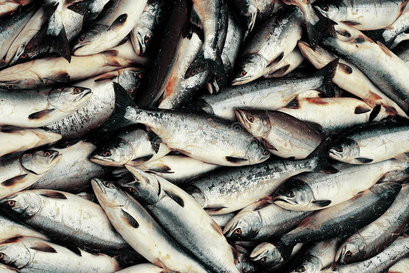Pescados fotos de archivo