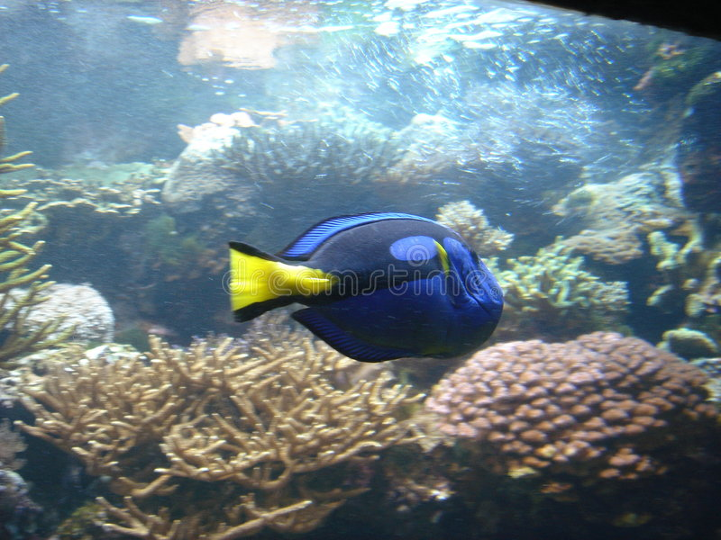 Pescados 2 fotos de archivo