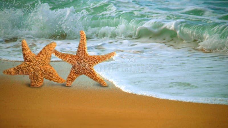 Pescados adorables de la estrella que recorren a lo largo de la playa fotos de archivo