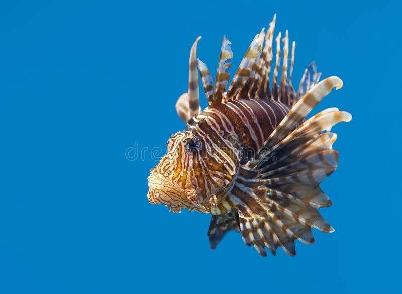 Pescados - aguas tropicales imagen de archivo