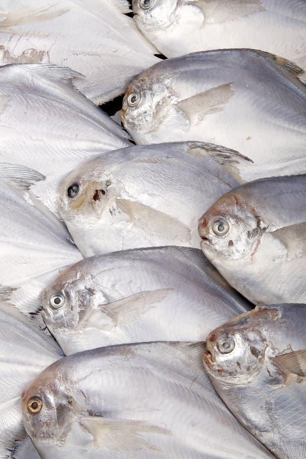 Pescados - alimento de mar. foto de archivo libre de regalías