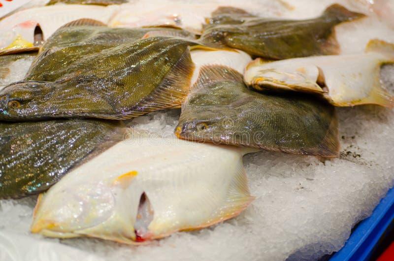 Pescados amarillos frescos del leporina de Rhombosolea de la platija del vientre que congelan en el hielo en un mercado de pescad foto de archivo
