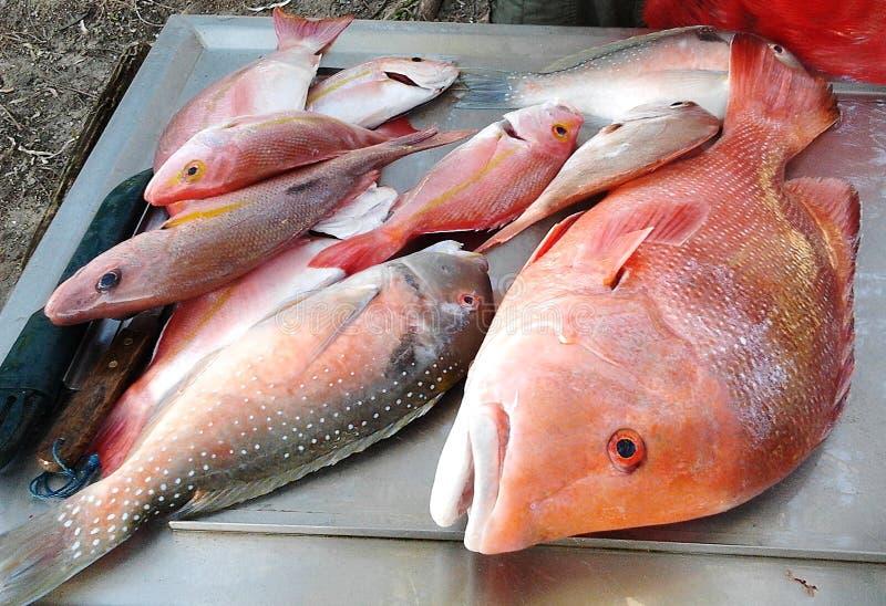 Pescados anaranjados de Roughy imagen de archivo