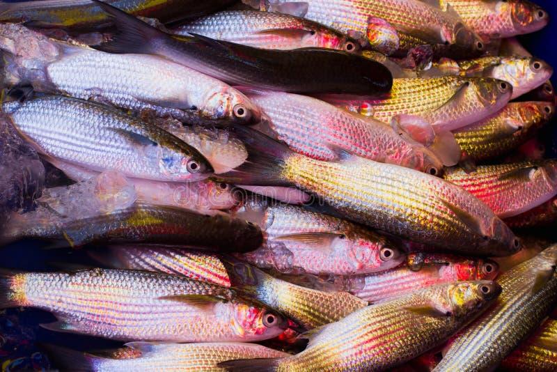 Download Pescados CONGELADOS imagen de archivo. Imagen de cocina - 42443225