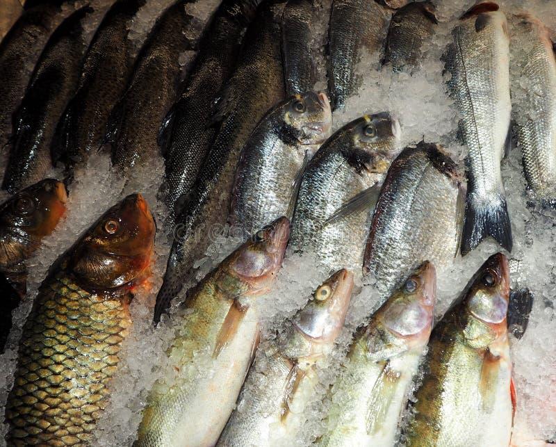 Pescados congelados en el hielo en el mercado de la comida fotografía de archivo libre de regalías