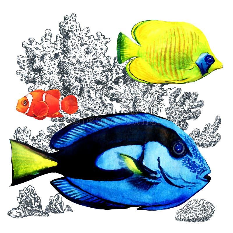 Pescados coralinos marinos con los corales, aislados Peces de mar coloridos en acuario Ejemplo de la acuarela en el fondo blanco ilustración del vector