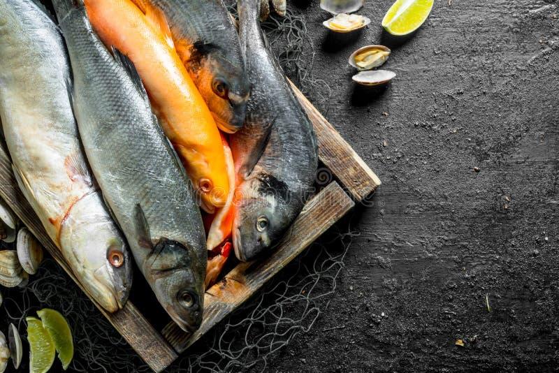Pescados crudos en la bandeja con las ostras y las rebanadas de la cal fotos de archivo