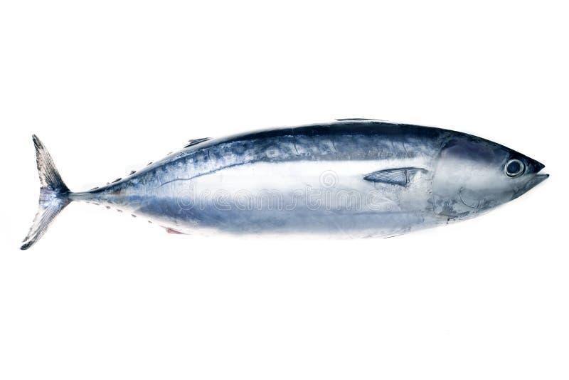 Pescados de atún imagenes de archivo