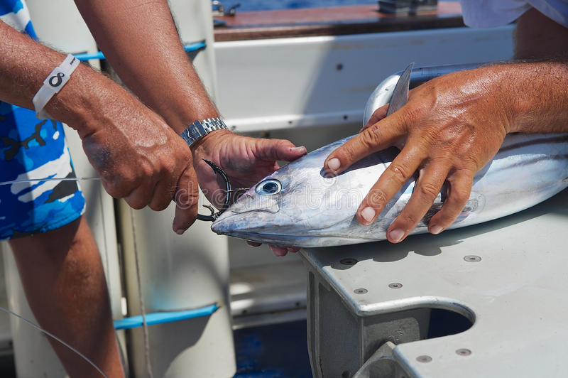 Pescados de atún del arreglo de la gente como cebo para la pesca de la aguja, en el mar cerca de St Denis, Reunion Island fotografía de archivo