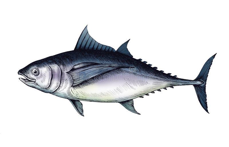 Pescados de atún dibujados mano aislados ilustración del vector