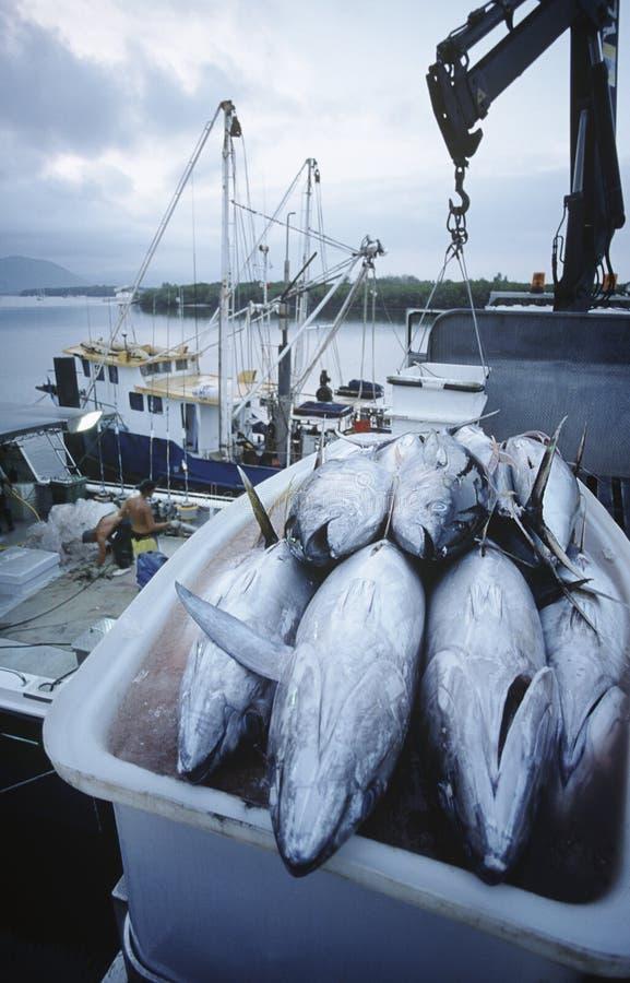 Pescados de atún en envase en los mojones Australia del amanecer del barco de pesca foto de archivo
