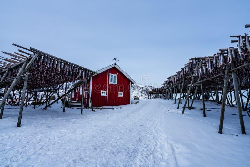 Pescados de bacalao de sequía en Reine, Noruega Paisaje de Norwgian imágenes de archivo libres de regalías