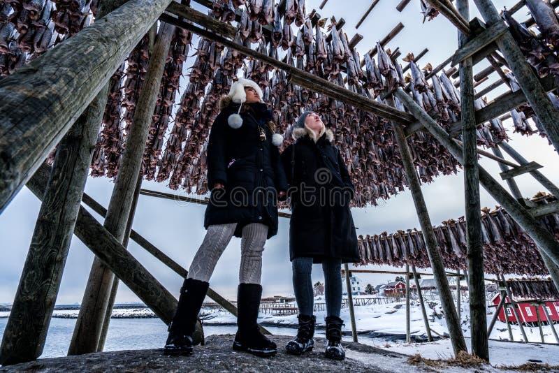 Pescados de bacalao de sequía en Reine, Noruega Paisaje de Norwgian foto de archivo