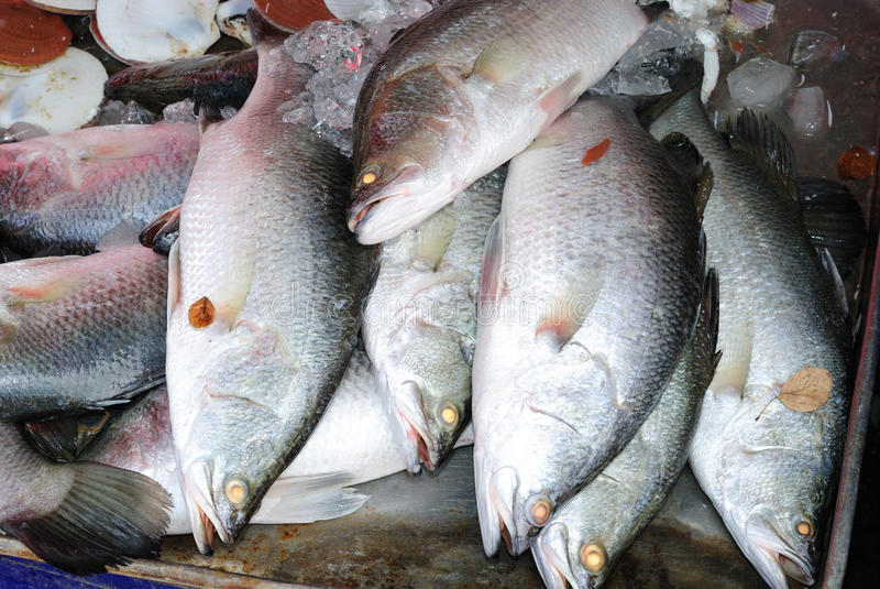Pescados de Barramundi para cocinar imagen de archivo