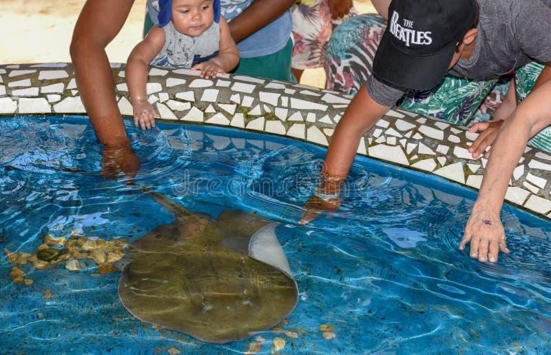 Pescados de caricia de la raza de la gente en el tanque de Tamar del proyecto en el Praia hacer Forte en el Brasil fotografía de archivo
