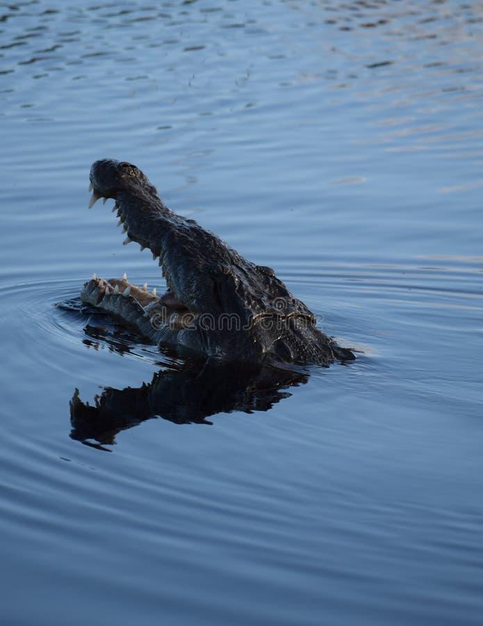 Pescados de cogida del cocodrilo fotos de archivo