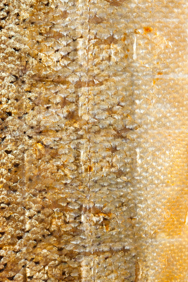 Pescados de color salmón de las escalas brillantes del primer como textura animal del fondo de la comida fotos de archivo