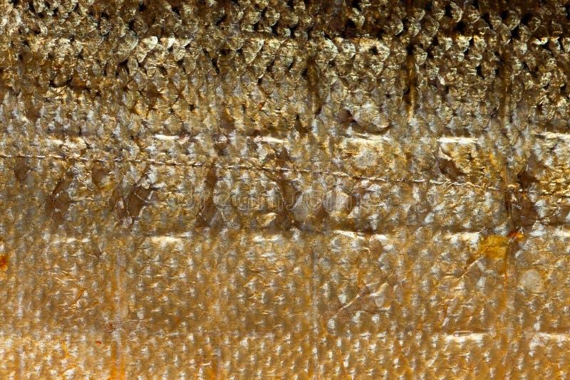 Pescados de color salmón de las escalas brillantes del primer como textura animal del fondo de la comida imagenes de archivo