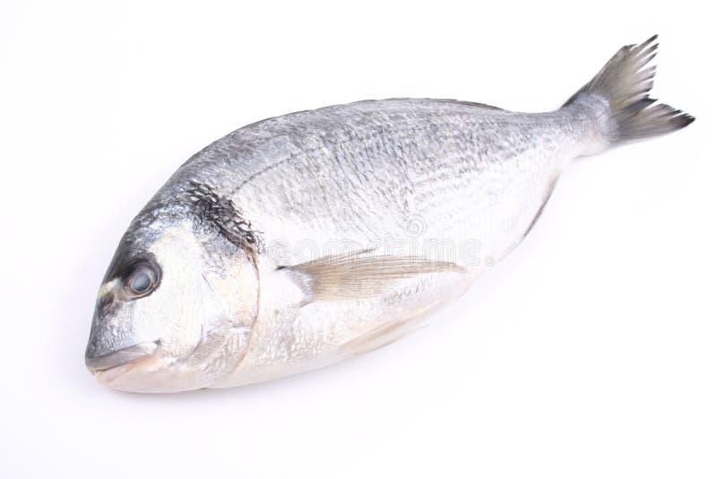 Pescados de Dorada imagen de archivo