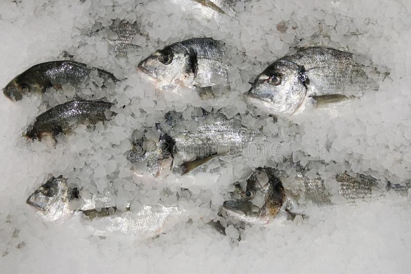Pescados de Dorado en el hielo pescados frescos del sparus en la opinión de top del hielo foto de archivo libre de regalías