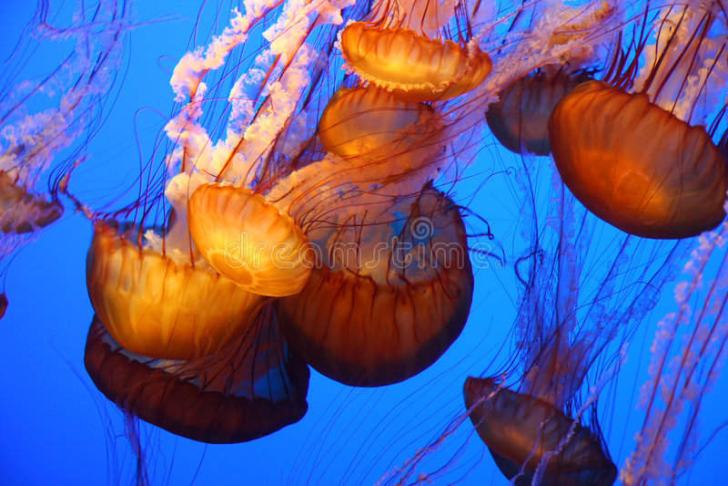 Pescados de jalea gigantes fotos de archivo