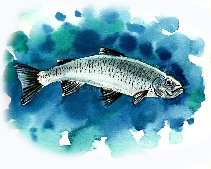 Pescados de la acuarela libre illustration