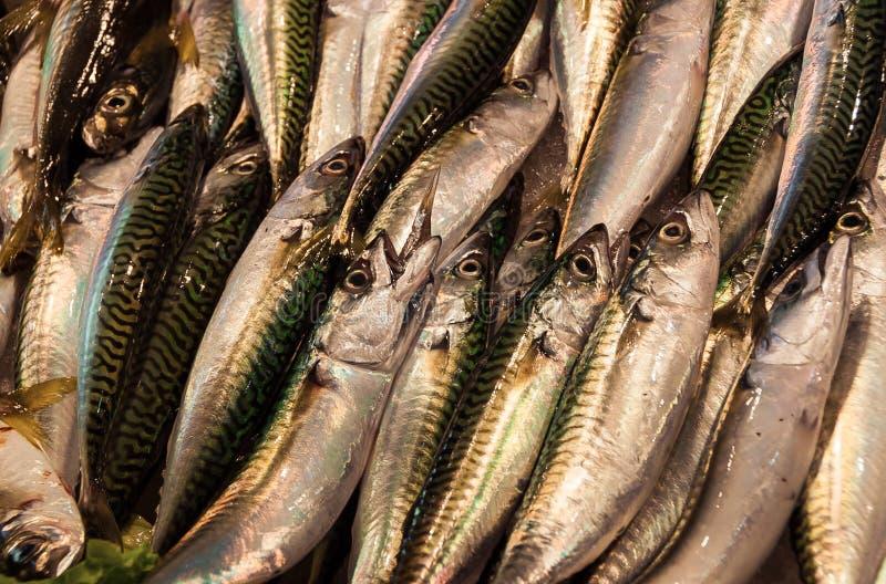 Pescados de la caballa foto de archivo libre de regalías
