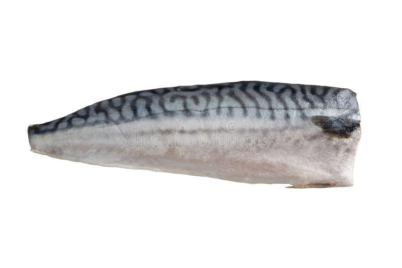 Pescados de la caballa aislados en el fondo blanco imagen de archivo