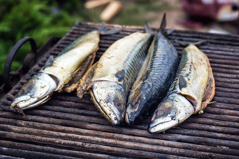 Pescados de la caballa en la parrilla y los carbones calientes, DOF La carne asada azul de la caballa del Scomber, caballa japone imagen de archivo