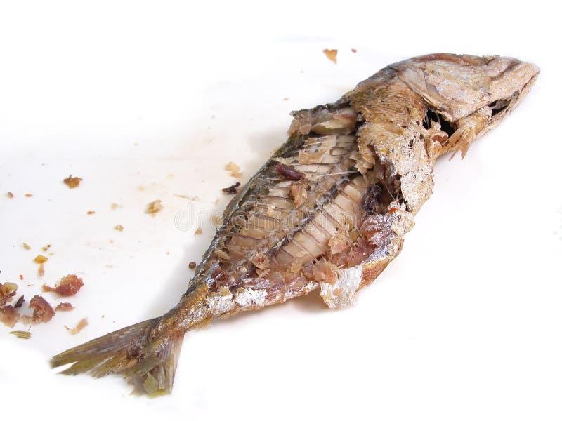 Pescados de la caballa que son half-length repasado fotografía de archivo