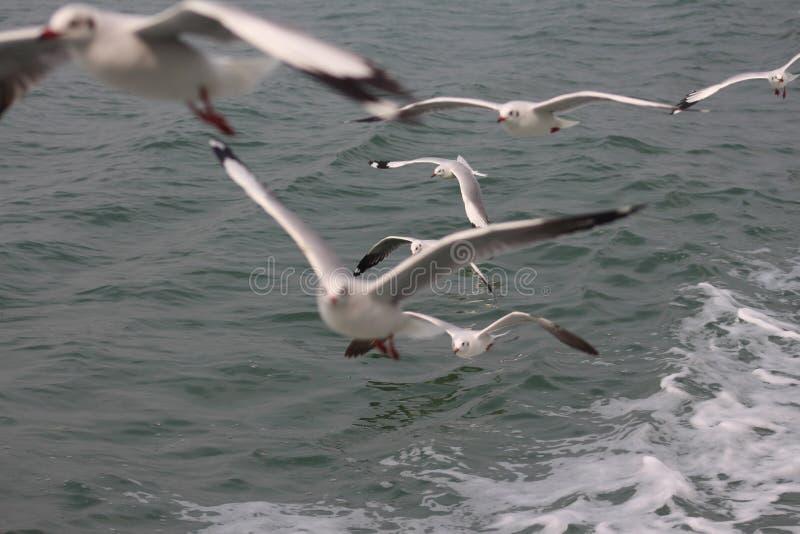 Pescados de la captura imagen de archivo