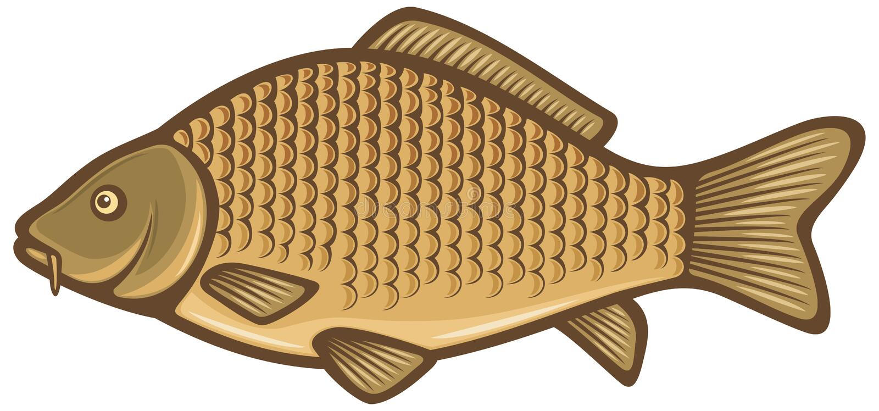 Pescados de la carpa ilustración del vector