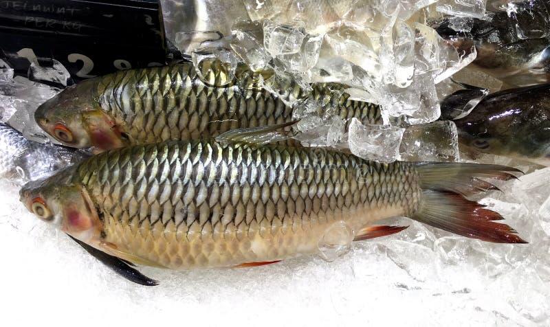 Pescados de la carpa de Hoven fresco con precio y etiqueta en malayo imágenes de archivo libres de regalías