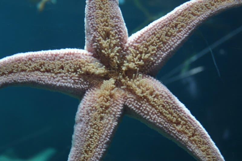 Pescados de la estrella imagen de archivo libre de regalías