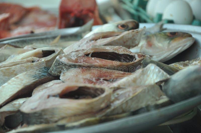 Pescados de los Hilsa imágenes de archivo libres de regalías