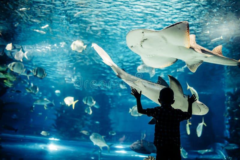 Pescados de observación del niño pequeño en acuario fotografía de archivo libre de regalías